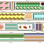 Gartendesign 2015