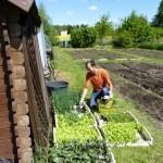 Gemüsegarten zum mieten Berlin