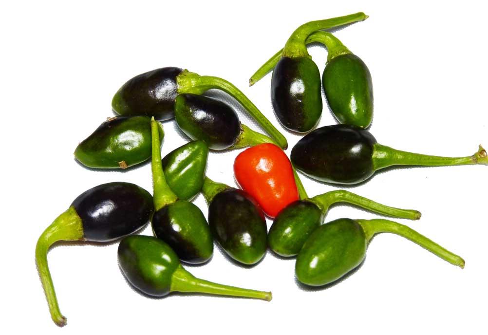 Chili Cabanero Saatgut